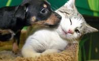 Bizonyított tények a háziállatok jótékony hatásairól